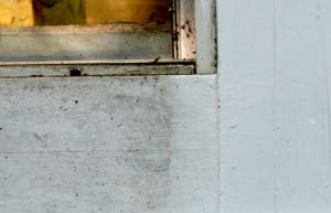 Learn how to remove mildew from windows and siding